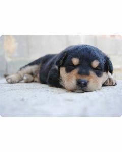 plastic-placemats-hond-dieren-design